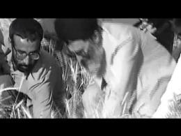 درو کردن گندم توسط امام خامنه ای