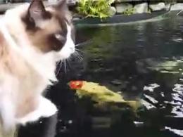 رفاقت باورنکردنی گربه و ماهی