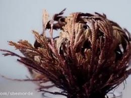 گیاهان رستاخیزی : زندگی دوباره پس از مرگ
