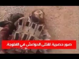داعشی هایی که نتوانستند از فلوجه عراق فرار کنند!+فیلم (18+)