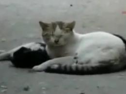 تلاش گربه برای زنده کردن گربه دیگر