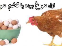 مرغ یا تخم مرغ؟