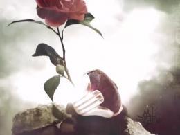 نماهنگ  راز کوچه|کربلایی امیر محمدی