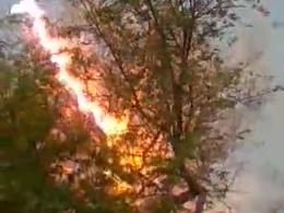 صحنه هولناک از برق گرفتگی یک درخت !!