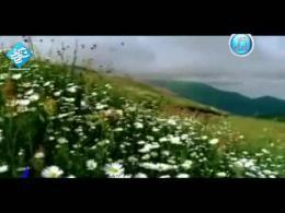 ولادت پیامبر (ص) - نماهنگ - میلاد گل