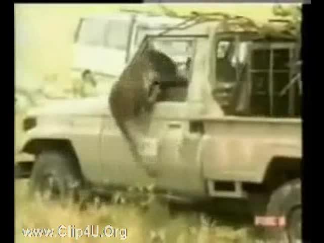 دانلود کلیپ وحشتناک حمله حیوانات وحشی به انسان