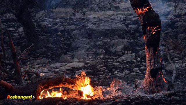 زاگرس در آتشِ بی تدبيری