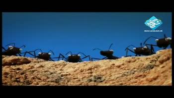 انیمیشن مورچه ها
