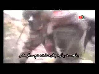 شیران حزب الله